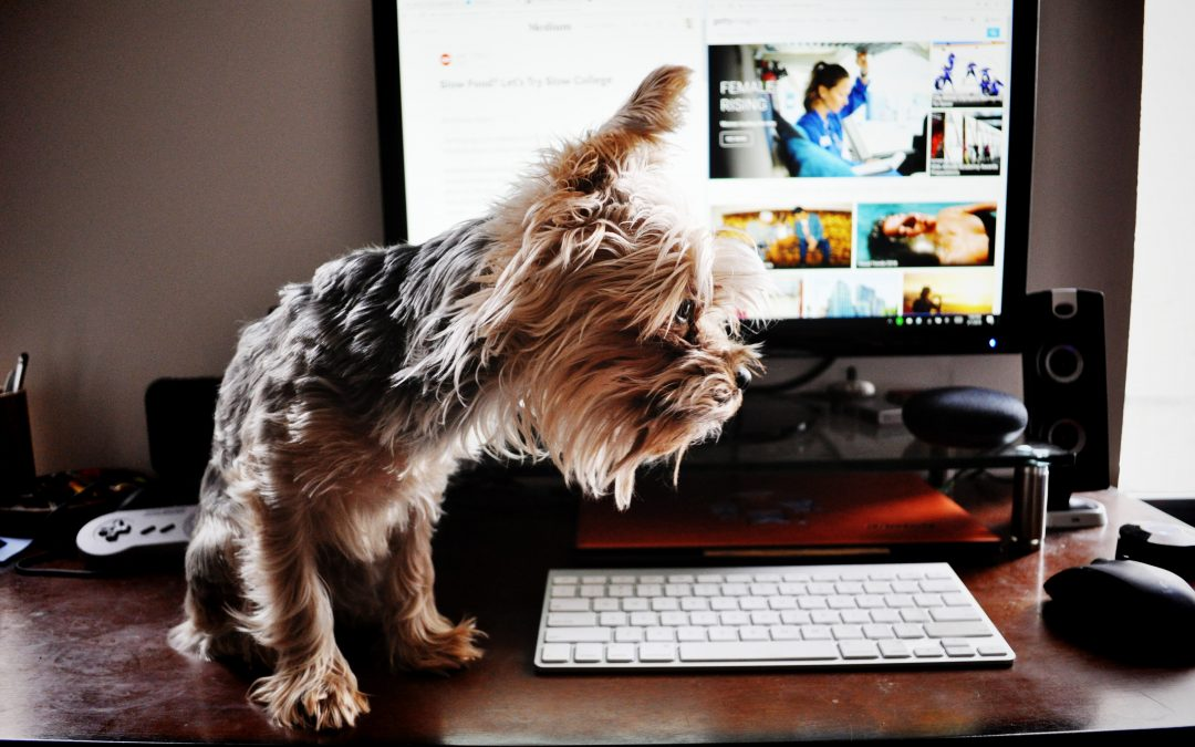 Naked men and peeing dogs: Freelancers share their most FML working from home mistakes
